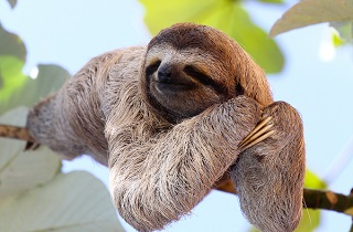 Don't be a sloth! Avoid a decline when refinancing for a better deal